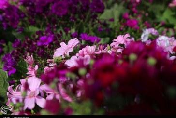"""همت بلند کارآفرین اردستانی در تولید محصولات گلخانهای/ اشتغالزایی ۱۰۰ نفره با تولید گل """"لیسیانتوس"""""""