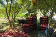 ۷۰ درصد «یاقوت سرخ» اردستان به دلیل کمبود صنایع تبدیلی ارزان فروخته میشود