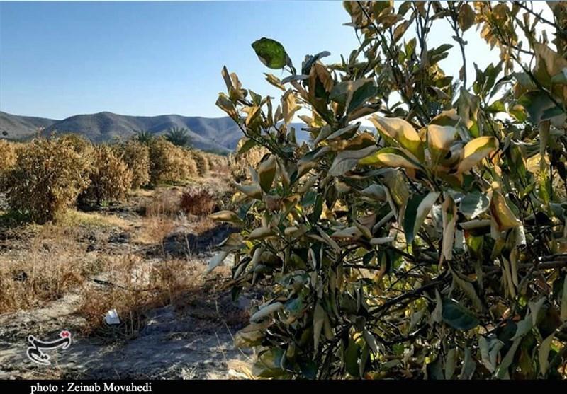 بهرهبرداری از پروژههای کشاورزی استان اصفهان ۲۳۰۰شغل ایجاد کرد